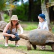Feeding Giant Turtle — Stock Photo #4730427