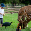 Feeding animals — Stock Photo