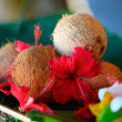 Stock Photo: Coconuts and hibiscus flowers