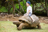 Riding Giant Turtle — Stock Photo