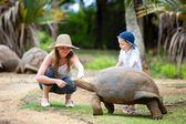 Feeding Giant Turtle — Stock Photo