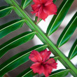Tropical flowers background — Stock Photo