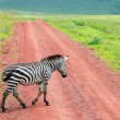 Zebra walking at road — Stock Photo #4918818