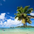 Palm tree hanging over beach - Stock Photo