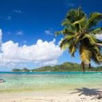 Palm tree hanging over beach — Stock Photo