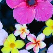 Tropical flowers in water - Stockfoto