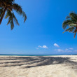 Palm trees on tropical beach — Stock Photo #5166932