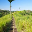 Bali rural area — Stock Photo