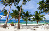 Perfect tropical beach with palm trees — Stock Photo