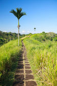 バリ島農村地域 — ストック写真