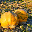 Two Pumpkins — Stock Photo #4039164