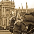 Horses near Library in Vienna. Sepia — Stock Photo