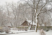 Wooden cabin in snowy park — Stock Photo