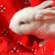 White rabbit on a white bandana — Stock Photo