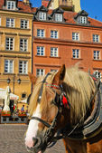 Horse in Warsaw — Stock Photo