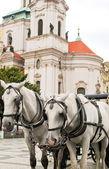 Bílí koně v Praze — Stock fotografie