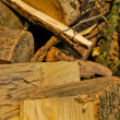 Chopped firewood — Stock Photo #5316782