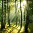 Morning sun beams in the autumn park - Stock Photo