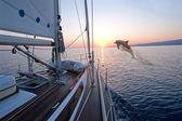Doplhin jumping near sailing boat — Stock Photo
