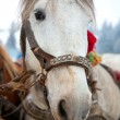 Horse head portrait — Stock Photo #4887790