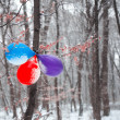 Birthday balloons hanging on the tree — Stock Photo