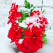 Red artificial flowers covered with snow - Stock Photo