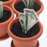 geld groei — Stockfoto