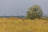 Flock of birds — Stock Photo