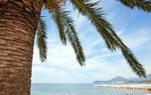 Palm body across lagoon — Stock Photo