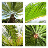 Four pictures of tropical palms — Stock Photo