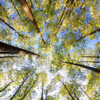 Looking up in forest - Stock Photo