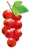 Vector red currant — Stock Vector