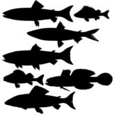 Vector silhouettes of river fish on white background — Stock Vector