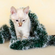 Royalty-Free Stock Photo: Thai kitten in Christmas tinsel.