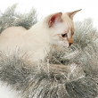 Thai kitten in Christmas tinsel. — Stock Photo