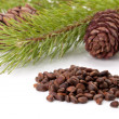Siberian pine nuts and needles branch — Stock Photo #4928879