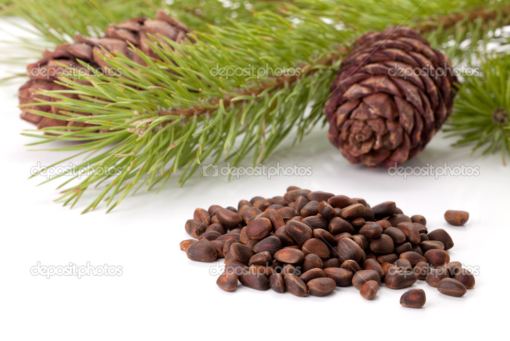 Siberian pine nuts and needles branch on white background — Stock Photo #4928879