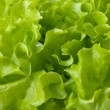 Stock Photo: Freshness green lettuce salad