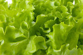 Salada de alface verde frescor — Fotografia Stock