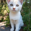 Cute white kitten - Foto Stock