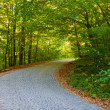 Empty road in the summer forest or park — Stock Photo