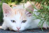 Cute kitty — Stock Photo