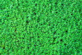 Yeşil doğal arka plan — Stok fotoğraf