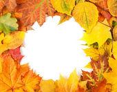 Yellow autumn leaves isolated on white — Stock Photo
