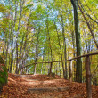 Wooden stairs on hill in autumnal forest — Foto Stock #4055718