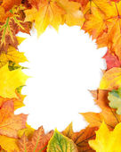 黄色秋天的树叶上白色隔离 — 图库照片