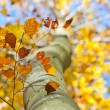 Stock Photo: Bright yellow tree foliage close-up