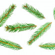 Green pine tree branches isolated on white background — Stock Photo #4147651