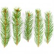 Royalty-Free Stock Photo: Green pine tree branches isolated on white background