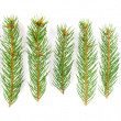 Green pine tree branches isolated on white background — Stock Photo #4147660